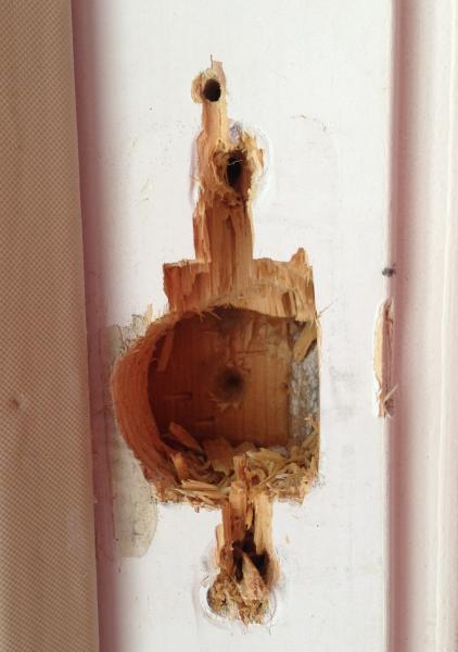 Door Latch Door Latch Repair Strike Plate