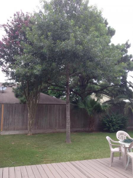 Name:  tree2.jpg Views: 237 Size:  48.3 KB