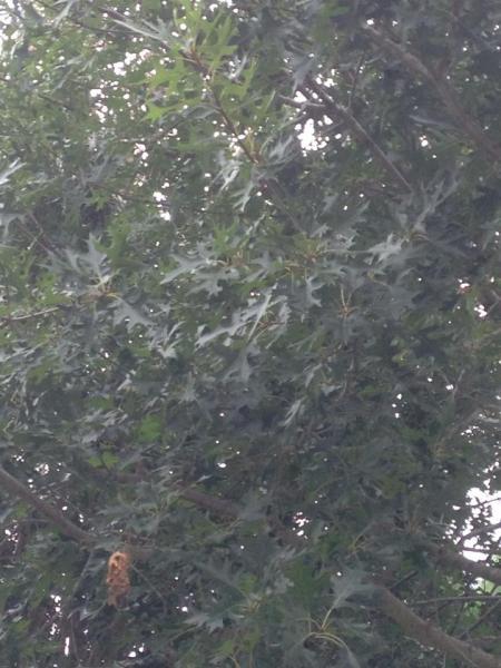 Name:  tree3.jpg Views: 230 Size:  47.5 KB