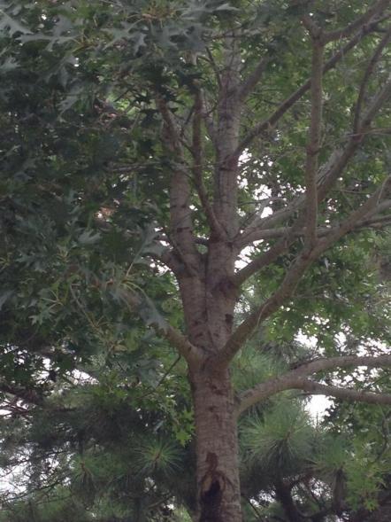 Name:  tree4.jpg Views: 189 Size:  50.0 KB