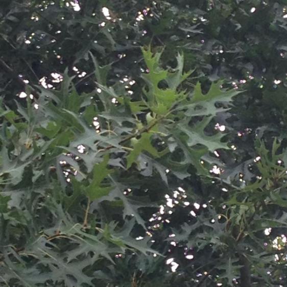 Name:  tree5.jpg Views: 203 Size:  52.3 KB