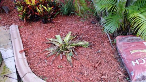 Name:  Plant1.jpg Views: 369 Size:  50.4 KB