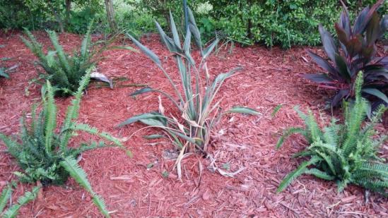 Name:  Plant2.jpg Views: 248 Size:  50.8 KB