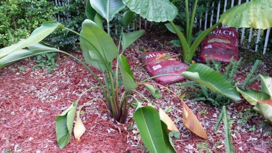 Name:  Plant4.jpg Views: 287 Size:  51.3 KB