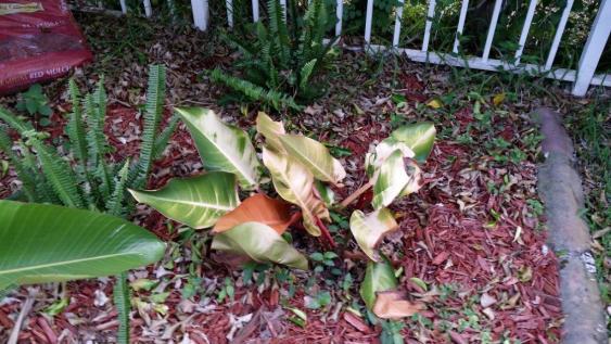 Name:  Plant6.jpg Views: 266 Size:  51.0 KB