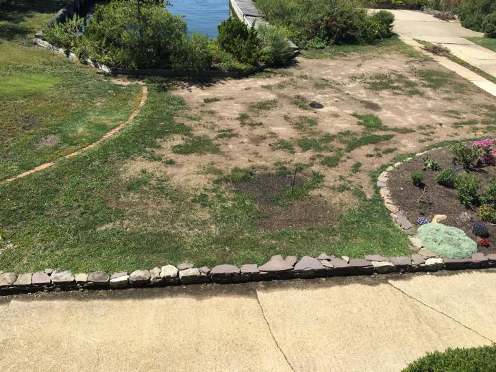 Name:  sideyard.jpg Views: 136 Size:  97.5 KB
