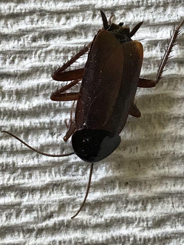 Name:  Bug.jpg Views: 61 Size:  114.8 KB