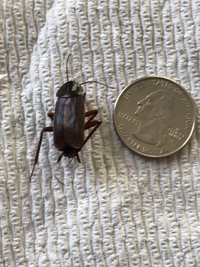 Name:  Bug 2.jpg Views: 61 Size:  122.2 KB