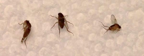 Little Bugs In Kitchen Sink