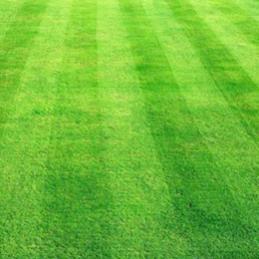 Name:  lawn-fresh-sod.jpg Views: 642 Size:  12.5 KB
