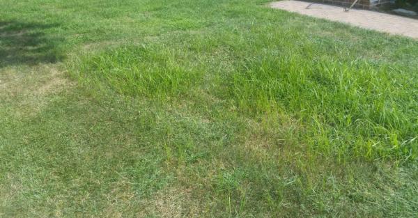 Name:  Front Lawn.jpg Views: 246 Size:  45.4 KB
