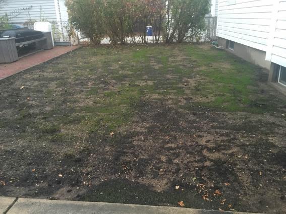 Name:  Backyard Lawn.jpg Views: 269 Size:  50.1 KB
