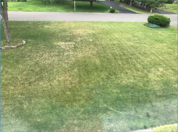 Name:  lawn.jpg Views: 947 Size:  50.4 KB