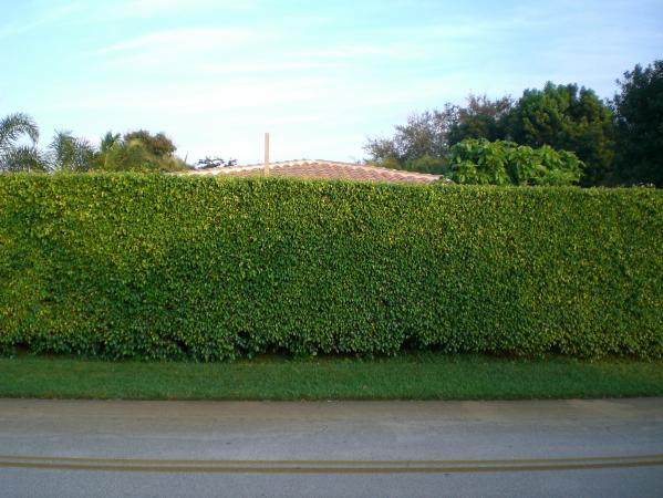 Name:  Hedge.jpg Views: 3729 Size:  50.2 KB