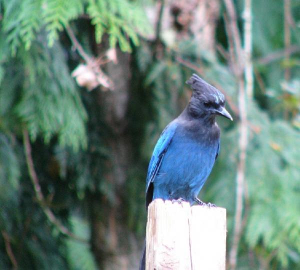 Name:  Bird1.jpg Views: 198 Size:  37.3 KB