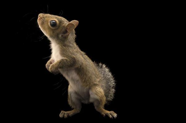 Name:  squirrel.jpg Views: 245 Size:  13.8 KB