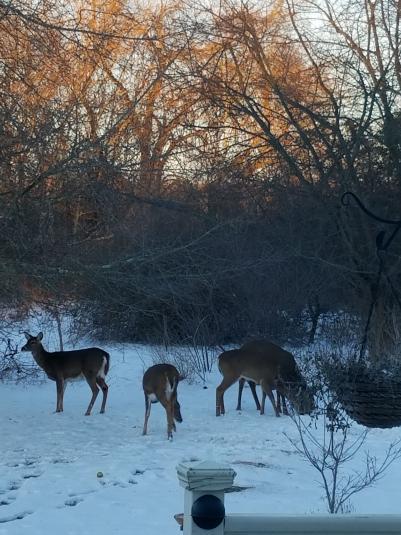 Name:  more deer.jpg Views: 155 Size:  51.2 KB