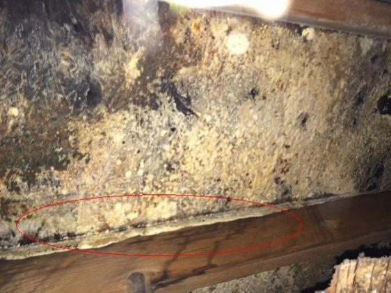Mold Removal Doityourself Community Forums