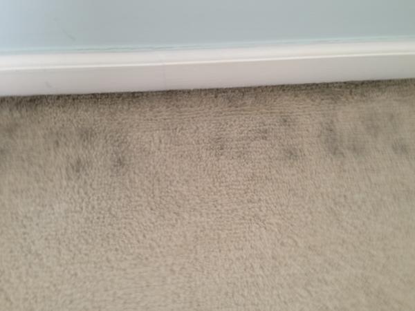 Black Marks On Carpet Alongside Baseboard Doityourself