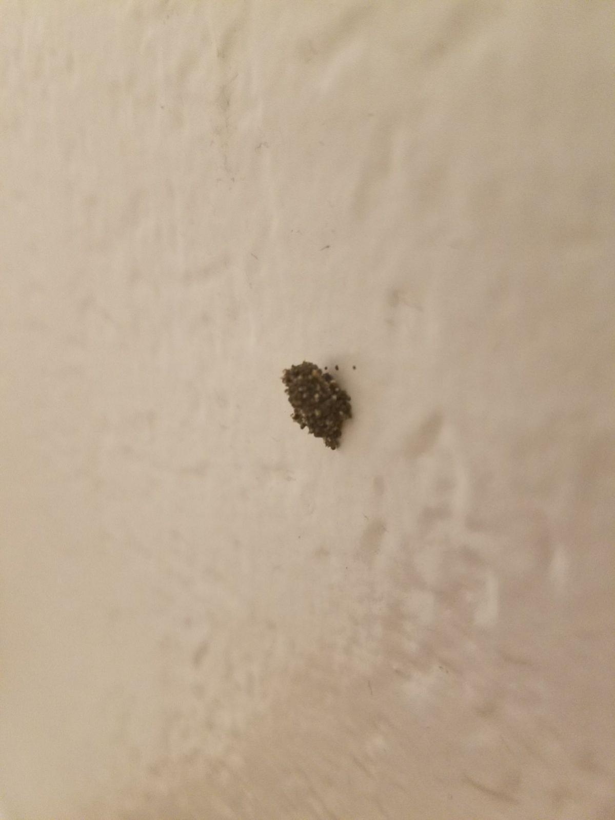 Whats Causing Black Holes My Sheetrock Wall Doityourself